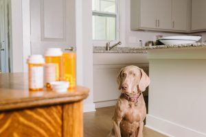 Recognizing Food Allergies in Your Pets